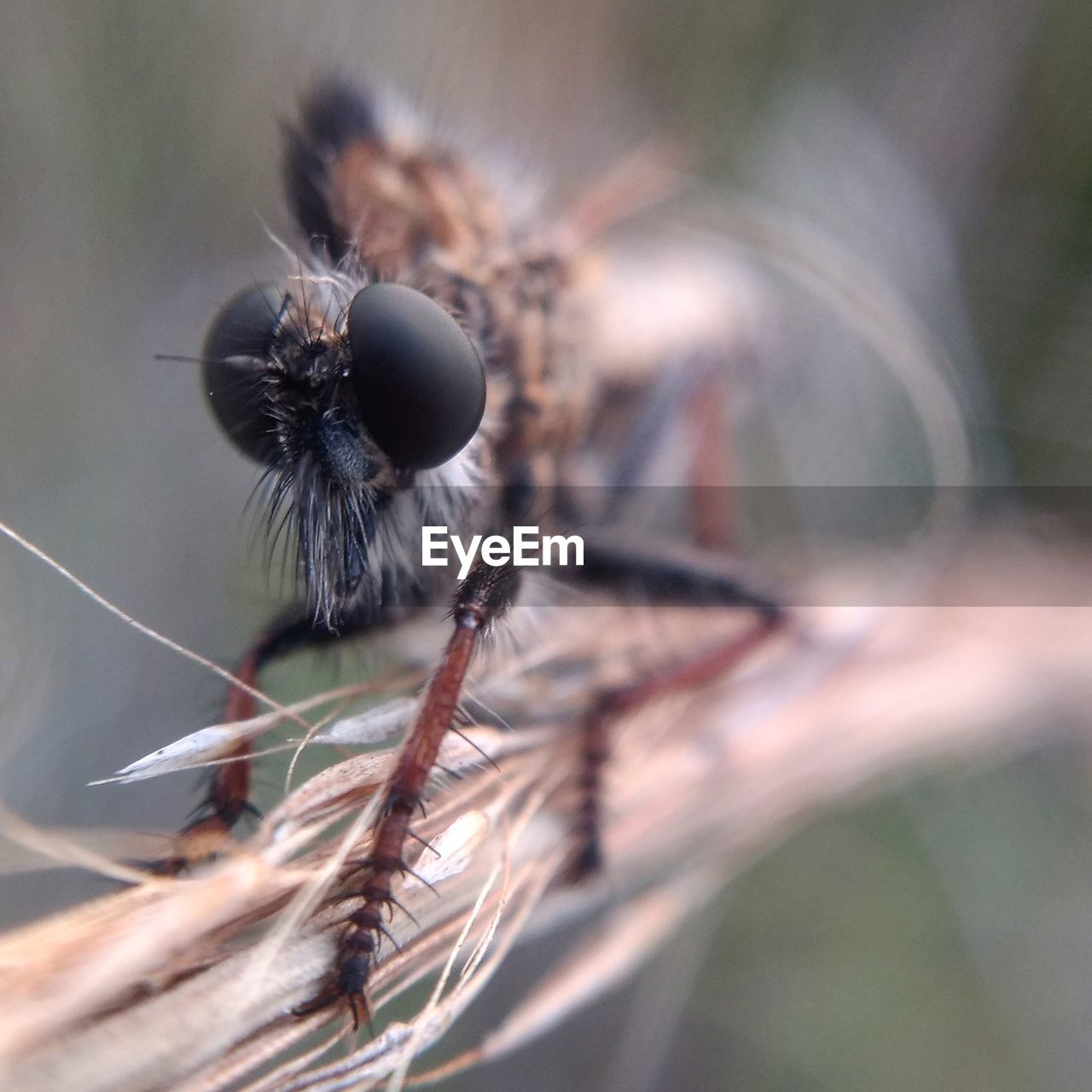 selective focus, close-up, plant, nature, no people, invertebrate, animals in the wild, insect, animal themes, day, animal wildlife, animal, beauty in nature, fragility, focus on foreground, vulnerability, one animal, outdoors, growth, freshness