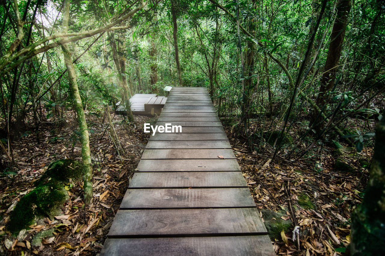 forest, tree, plant, direction, the way forward, land, wood - material, nature, tranquility, day, growth, no people, footpath, outdoors, woodland, empty, bridge, green color, architecture, beauty in nature, wood, footbridge, bamboo - plant, long