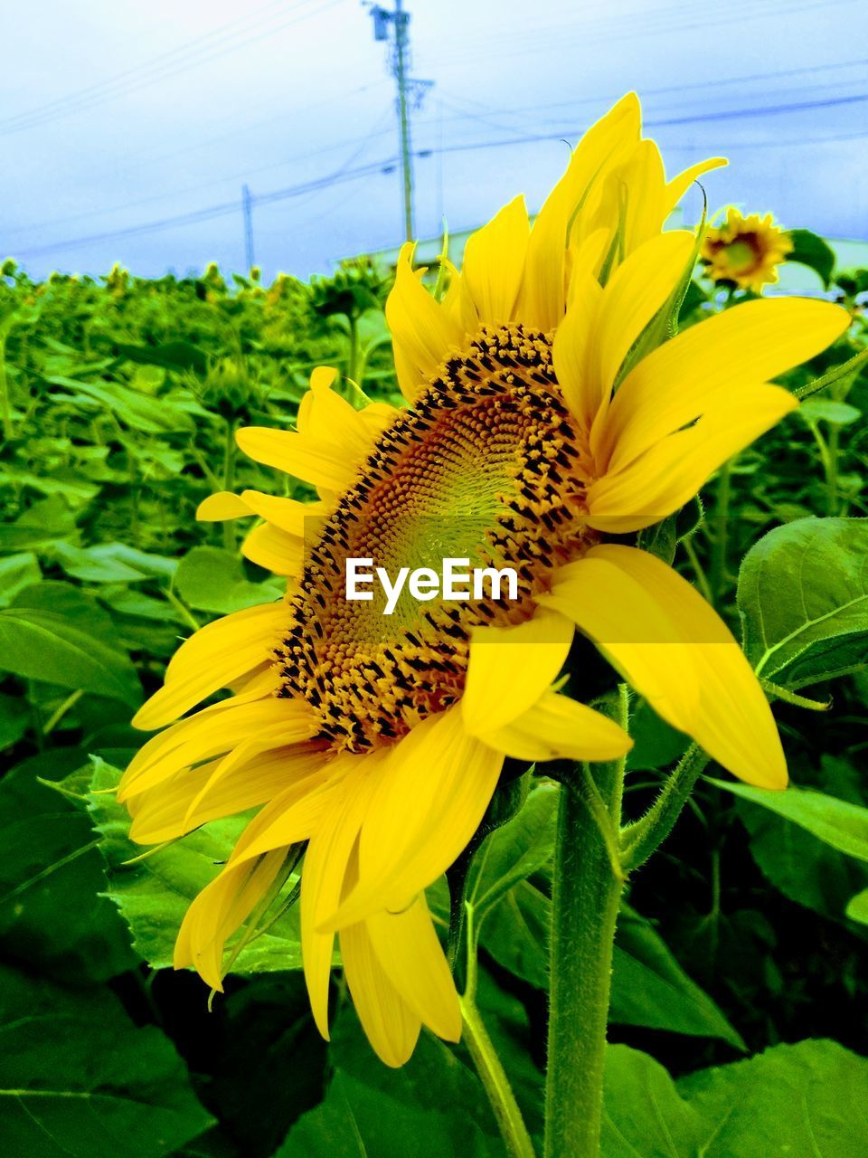 yellow, flower, fragility, growth, plant, beauty in nature, petal, nature, day, outdoors, no people, freshness, close-up, flower head, one animal, sunflower, animal themes