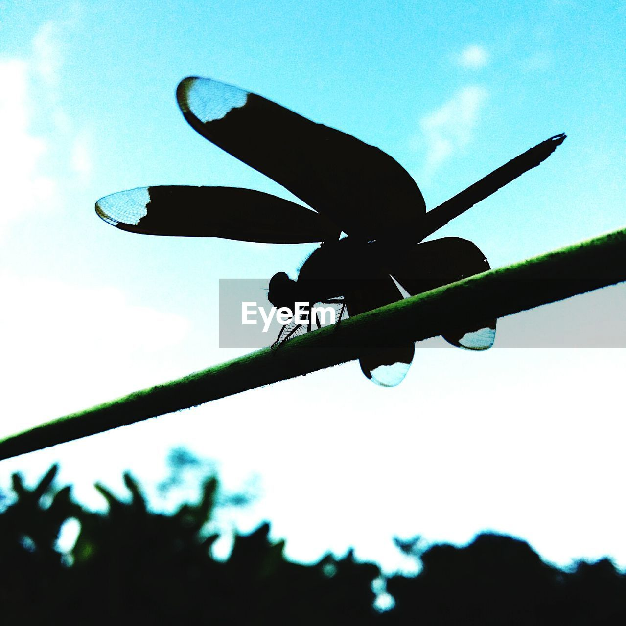low angle view, silhouette, sky, day, outdoors, close-up, no people, nature, animal themes, flying