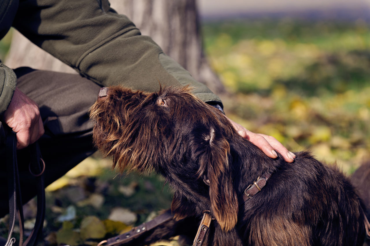 Midsection Of Man Stroking Hairy Dog On Field