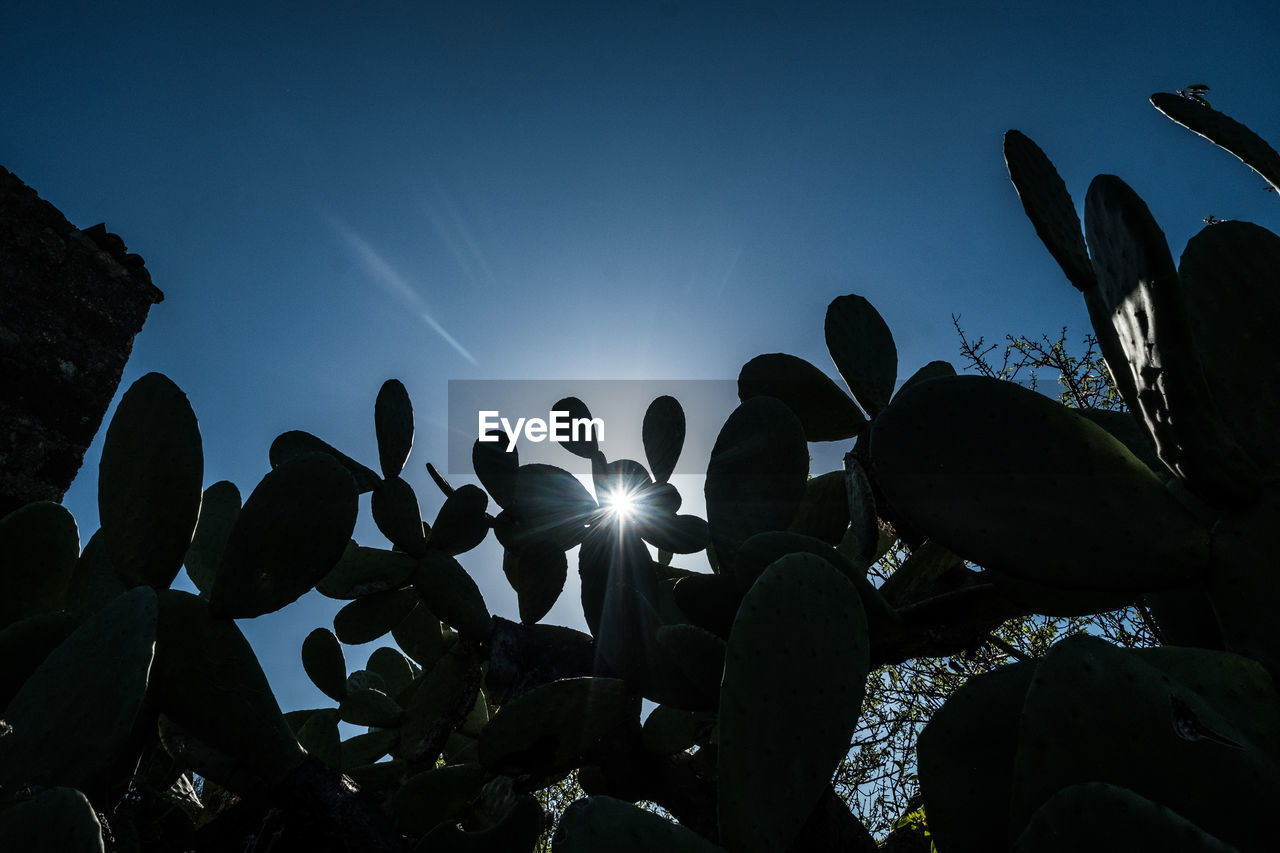 Low angle view of silhouette plants against clear blue sky during sunny day
