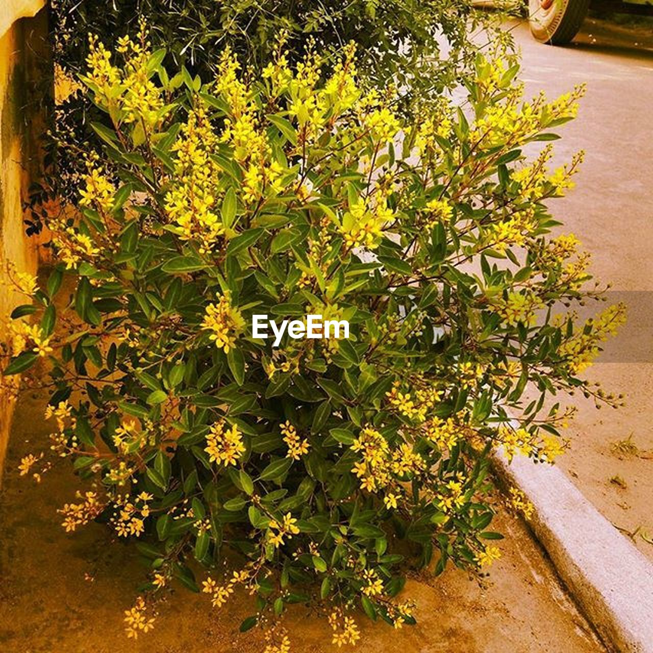 growth, plant, nature, yellow, outdoors, no people, flower, beauty in nature, day, freshness, close-up