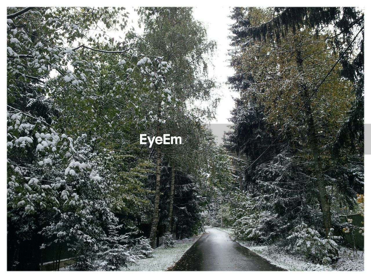 tree, nature, road, beauty in nature, day, tranquility, outdoors, no people, growth, the way forward, scenics, forest, snow, sky