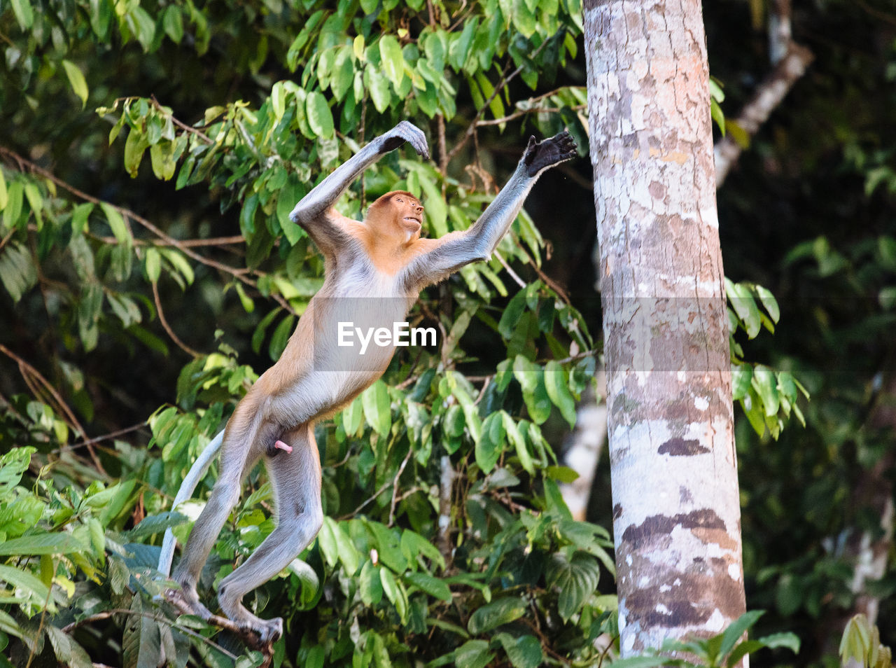 Monkey jumping on tree