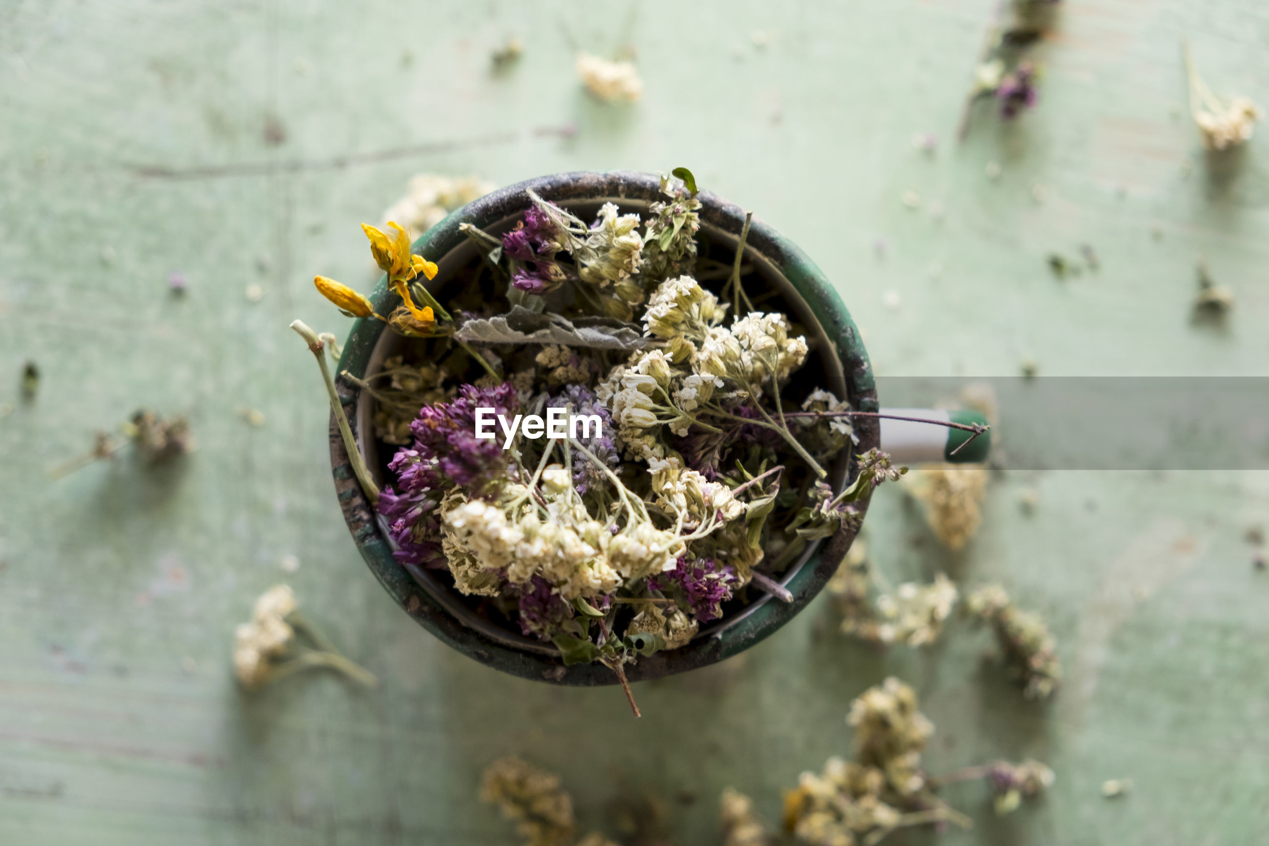 HIGH ANGLE VIEW OF PURPLE FLOWERING PLANT IN CONTAINER