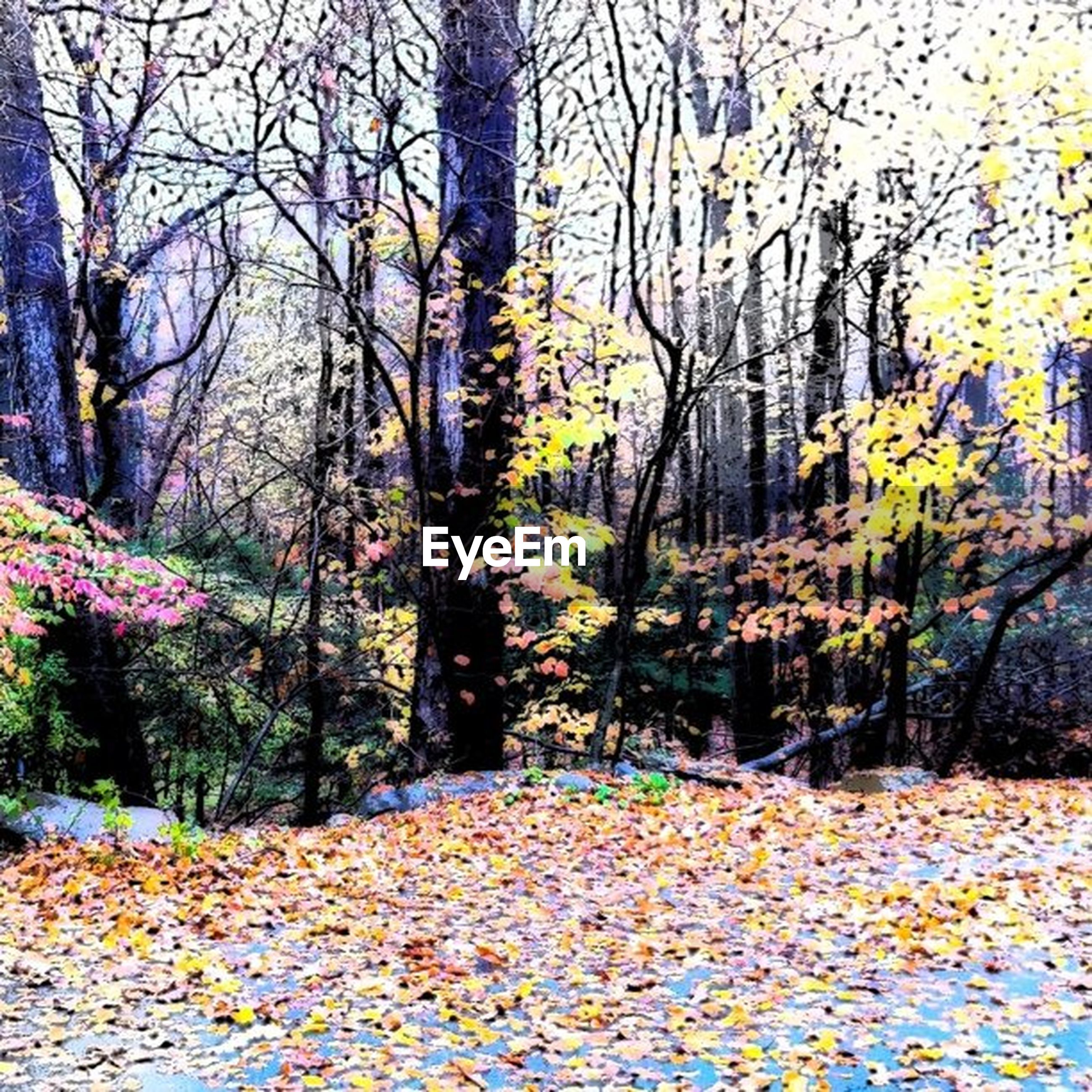 tree, autumn, change, season, tranquility, nature, beauty in nature, tree trunk, growth, tranquil scene, branch, scenics, leaf, park - man made space, yellow, fallen, day, no people, outdoors, abundance