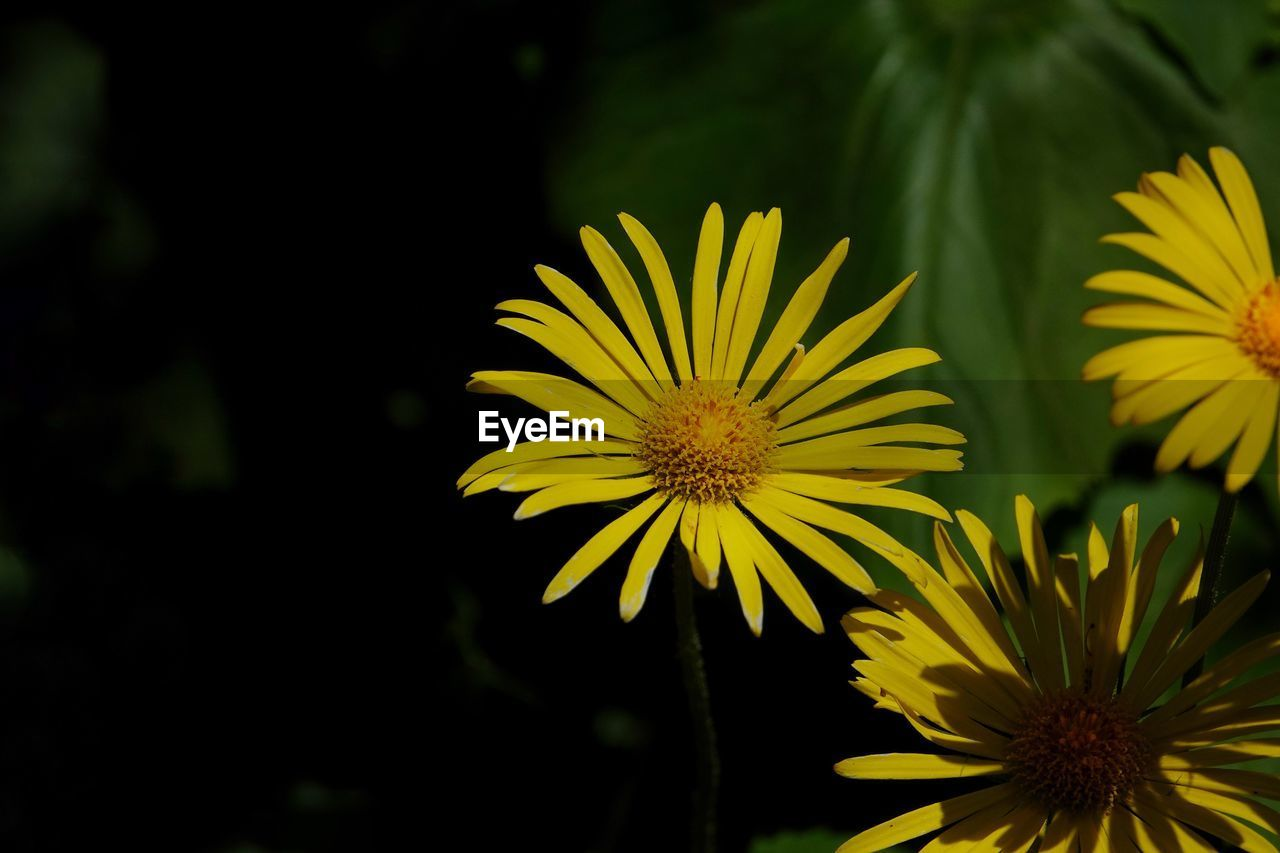 flowering plant, flower, yellow, fragility, vulnerability, freshness, plant, beauty in nature, close-up, flower head, petal, inflorescence, focus on foreground, growth, no people, nature, day, outdoors, selective focus, park, pollen