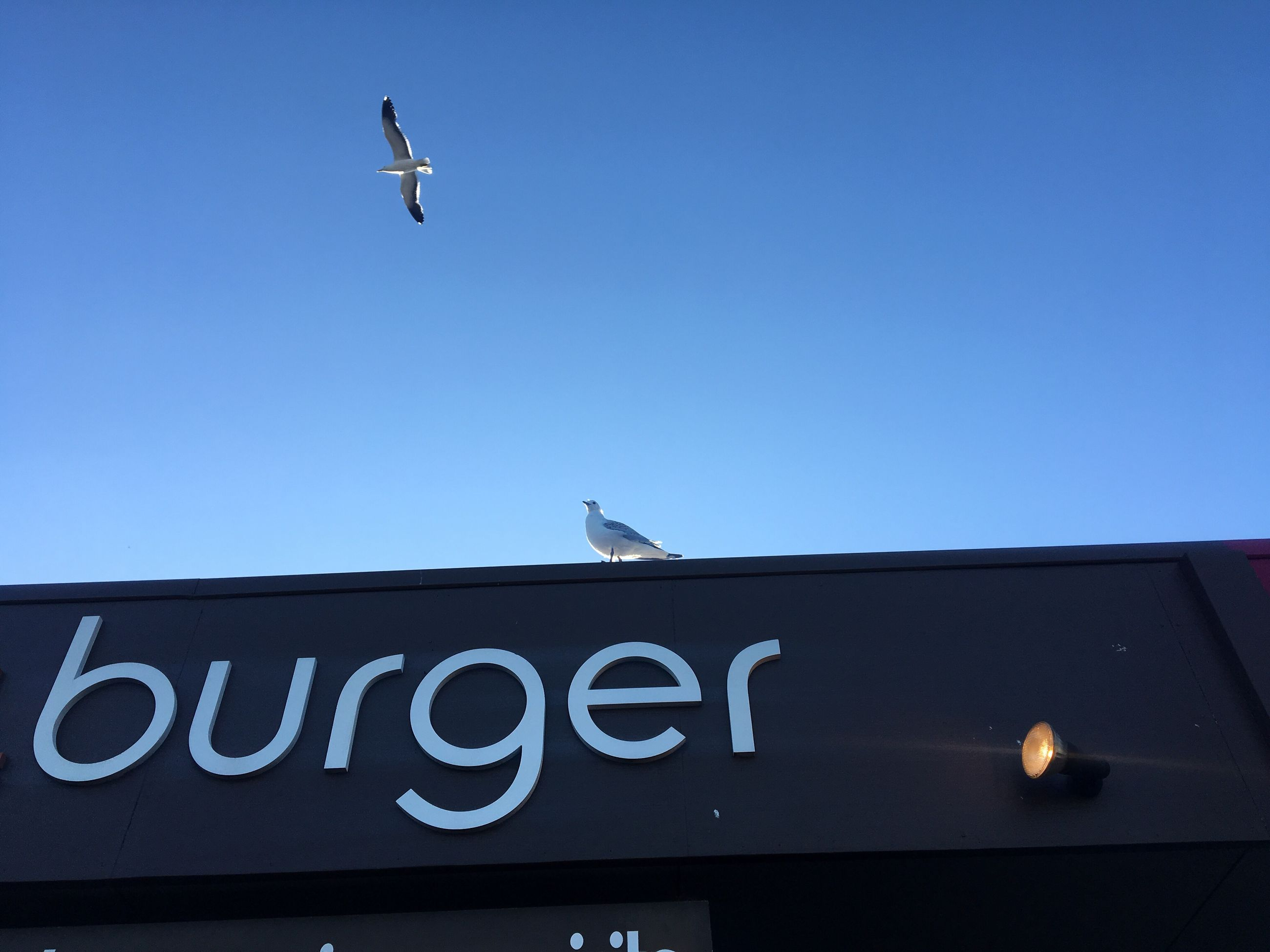 LOW ANGLE VIEW OF BIRDS ON BLUE SKY