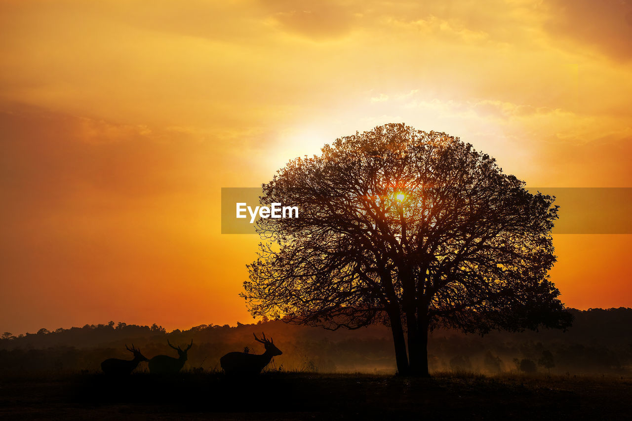 SILHOUETTE OF TREE ON FIELD AGAINST SKY DURING SUNSET