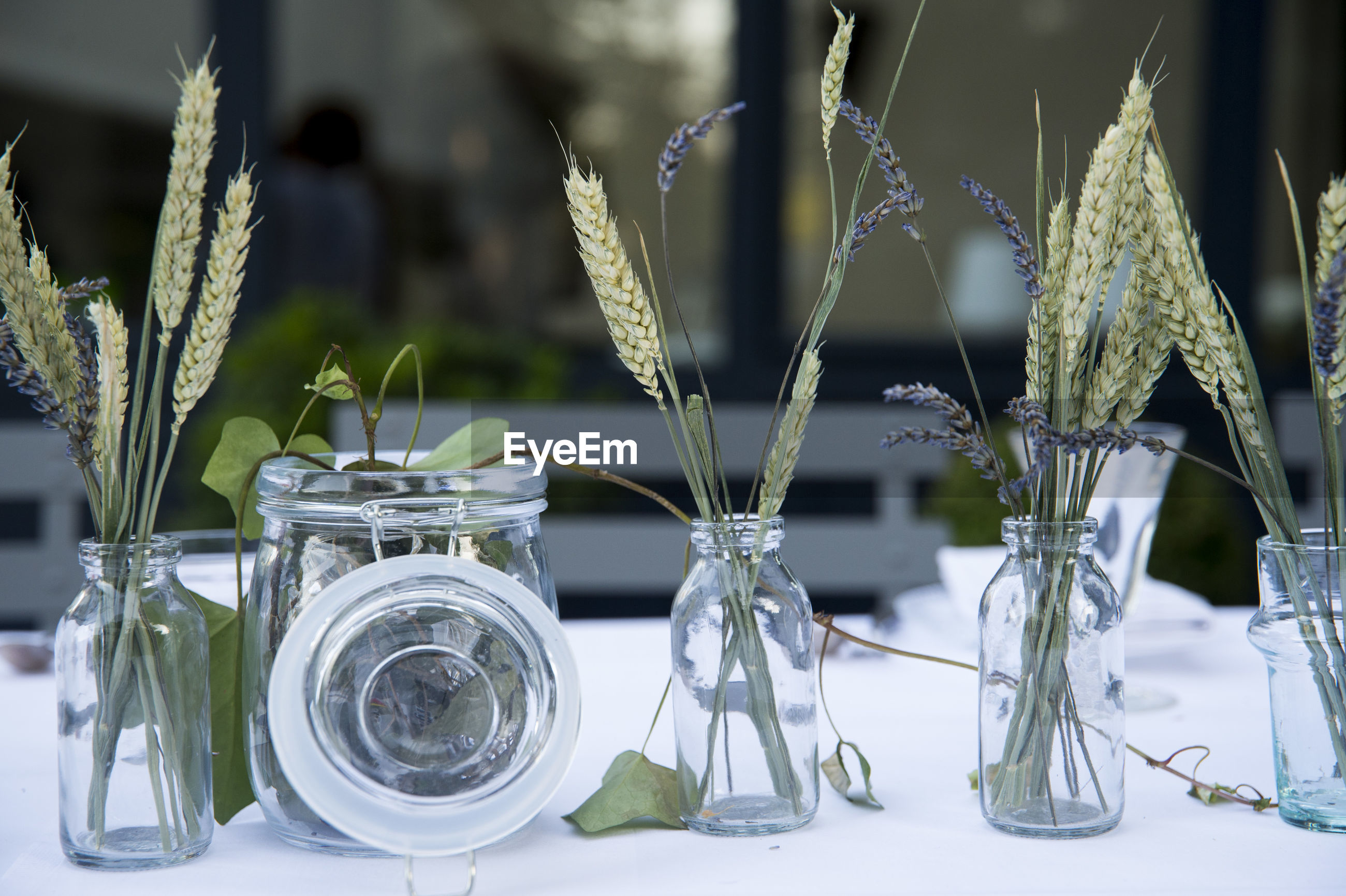 CLOSE-UP OF PLANTS IN GLASS VASE