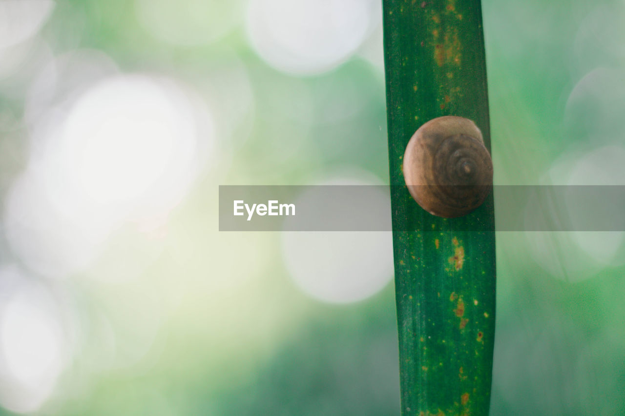 mollusk, close-up, green color, animal wildlife, focus on foreground, no people, gastropod, animal, shell, animal themes, snail, day, invertebrate, one animal, nature, animal shell, animals in the wild, outdoors, lens flare, wood - material