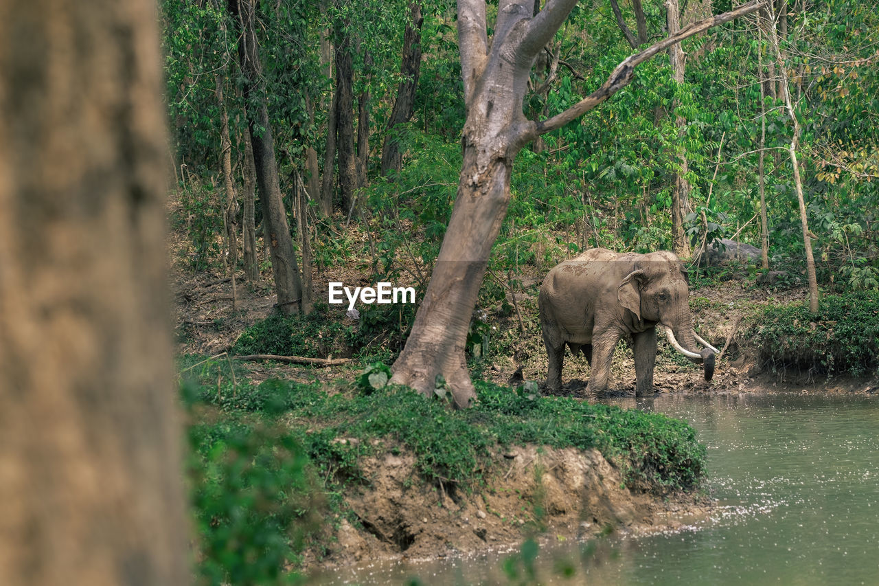 tree, animals in the wild, nature, outdoors, animal wildlife, one animal, no people, day, plant, mammal, forest, water, tree trunk, animal themes, grass