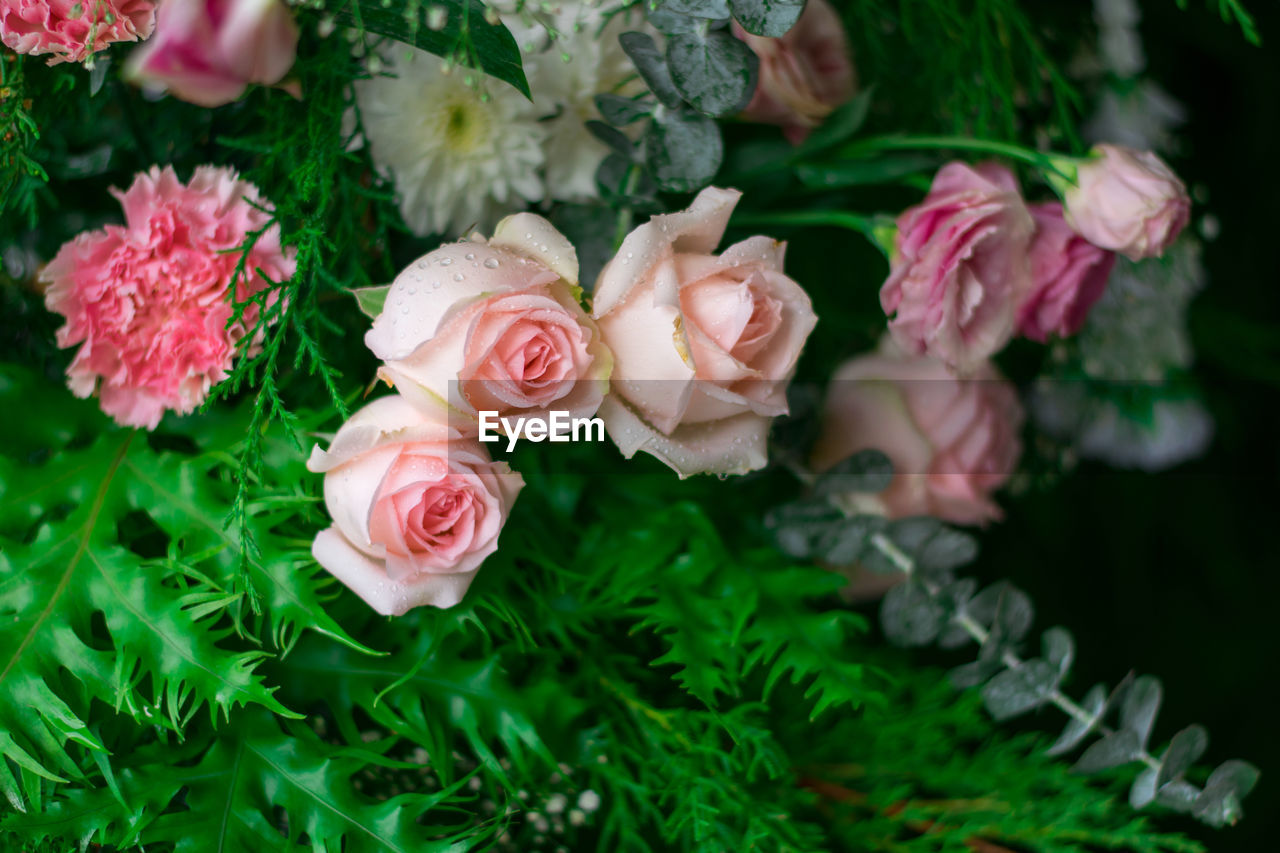 plant, flower, flowering plant, freshness, pink color, beauty in nature, close-up, vulnerability, fragility, nature, rose, petal, flower head, rose - flower, inflorescence, no people, green color, plant part, high angle view, leaf, outdoors, bouquet, flower arrangement