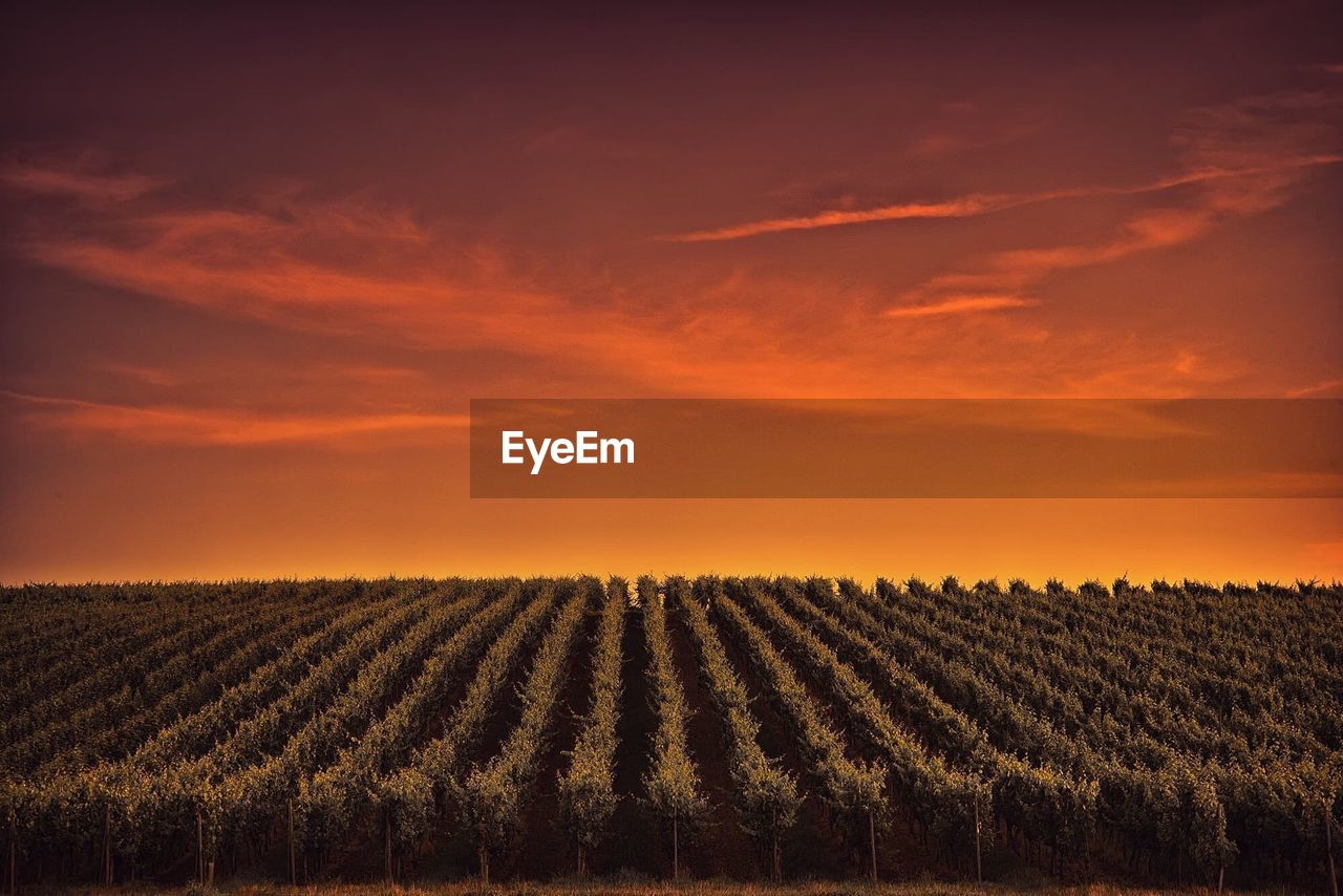 Agricultural field against sky during sunset