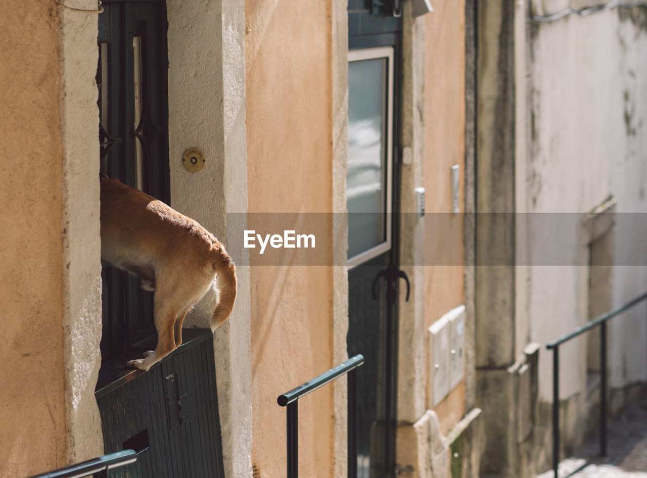 animal, animal themes, one animal, built structure, building exterior, architecture, mammal, vertebrate, no people, day, window, building, animal wildlife, domestic animals, focus on foreground, wall - building feature, animals in the wild, pets, metal, domestic, animal head