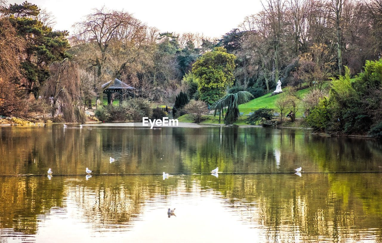 bird, animal themes, water, animals in the wild, tree, lake, reflection, nature, swan, swimming, waterfront, day, water bird, growth, flying, animal wildlife, outdoors, beauty in nature, no people, spread wings