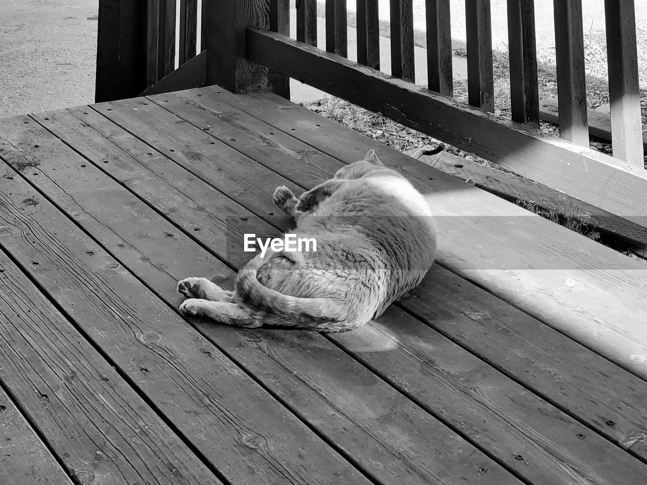 one animal, animal, animal themes, mammal, domestic, pets, domestic animals, vertebrate, domestic cat, cat, feline, relaxation, wood - material, resting, high angle view, no people, wood, lying down, sleeping, day, whisker