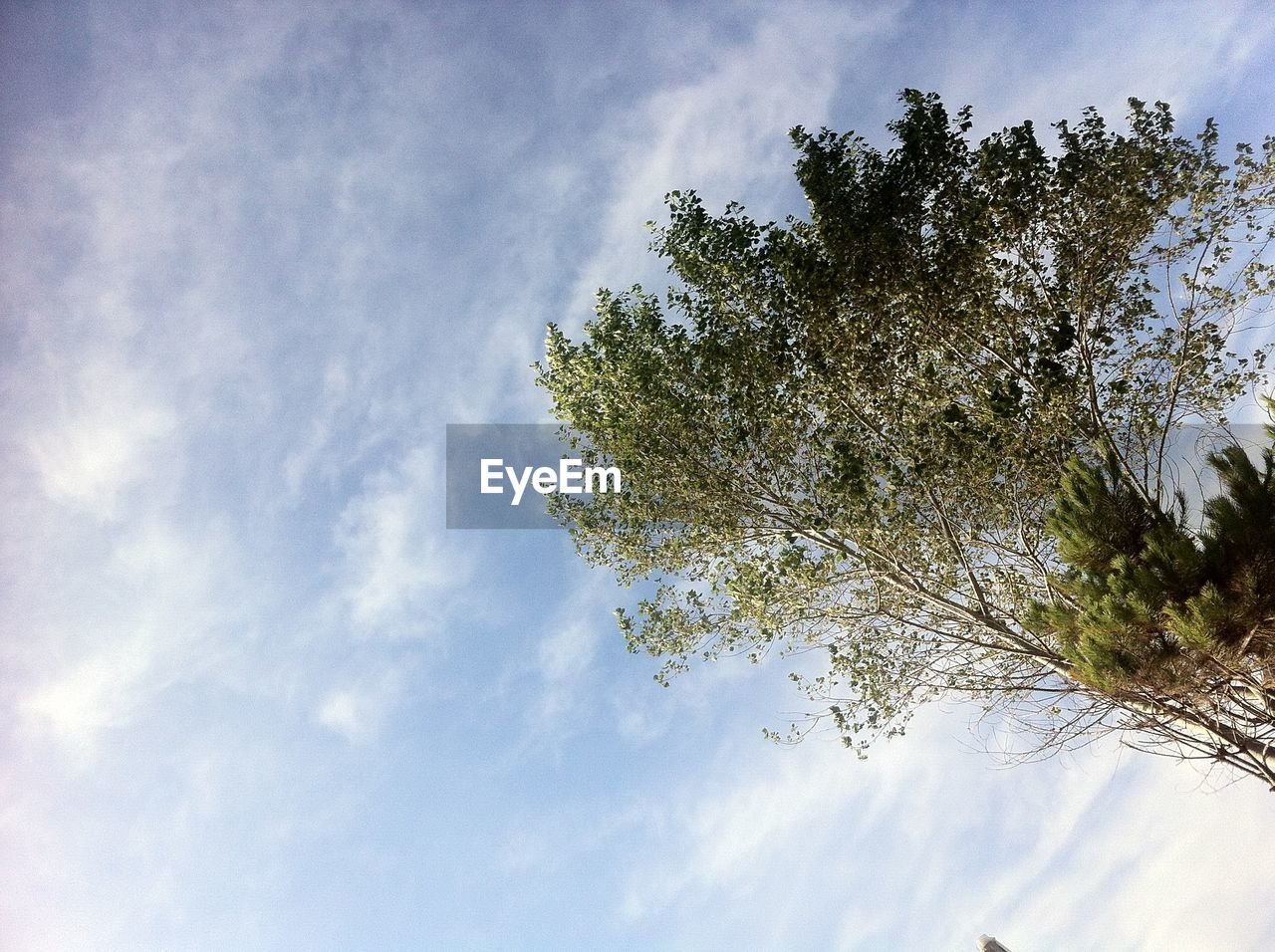 tree, sky, cloud - sky, low angle view, nature, growth, beauty in nature, day, no people, outdoors, branch, scenics