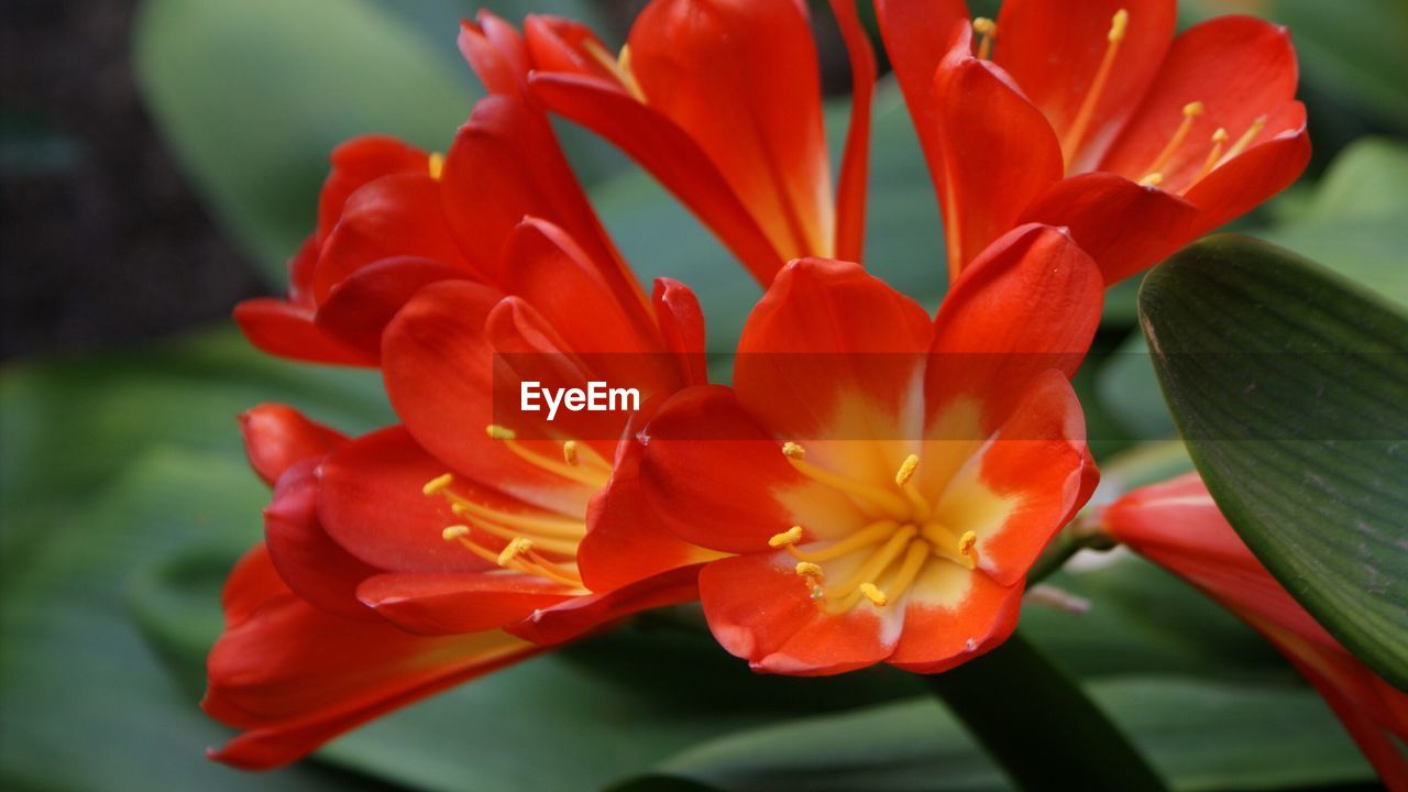 flower, petal, beauty in nature, flower head, fragility, freshness, nature, orange color, growth, close-up, blooming, plant, no people, stamen, day, red, outdoors, water, day lily