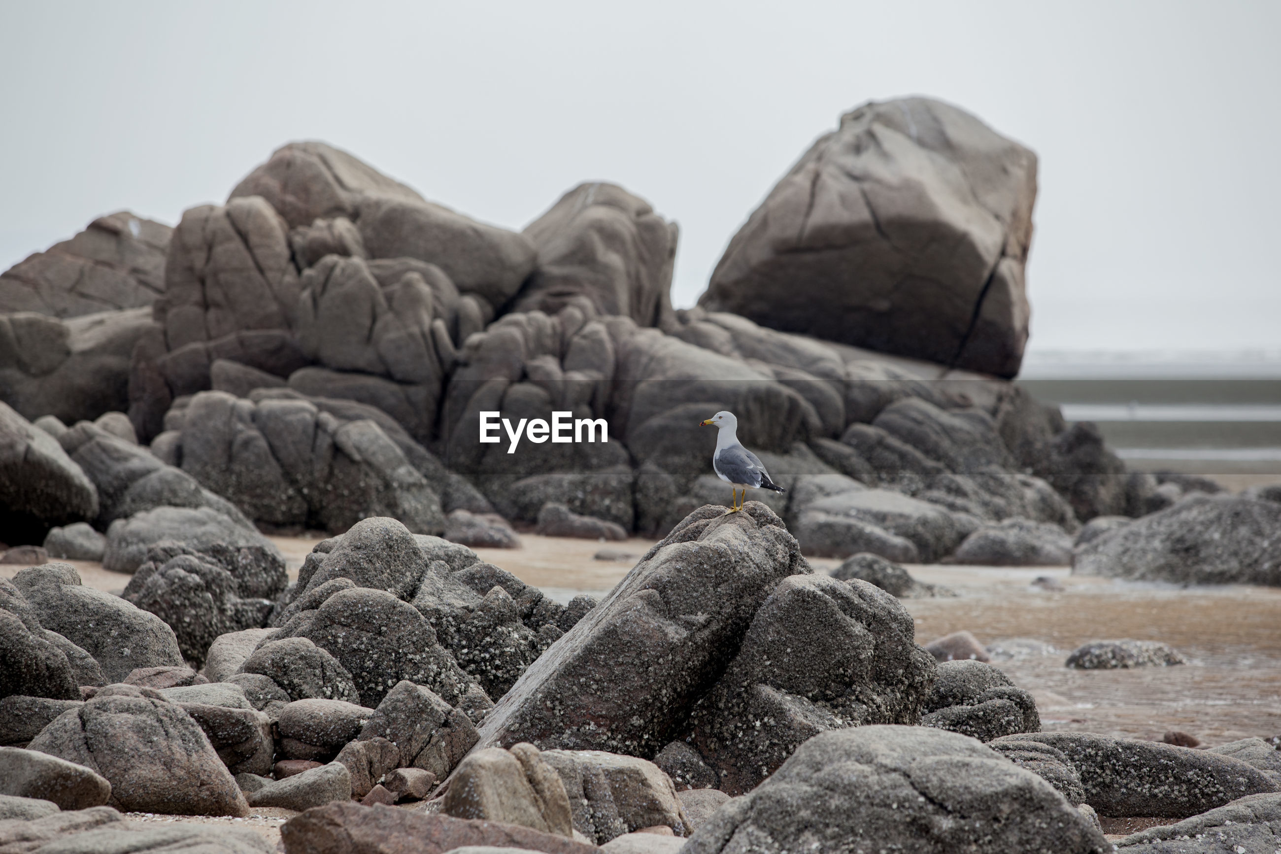 Side view of a bird perched on rock
