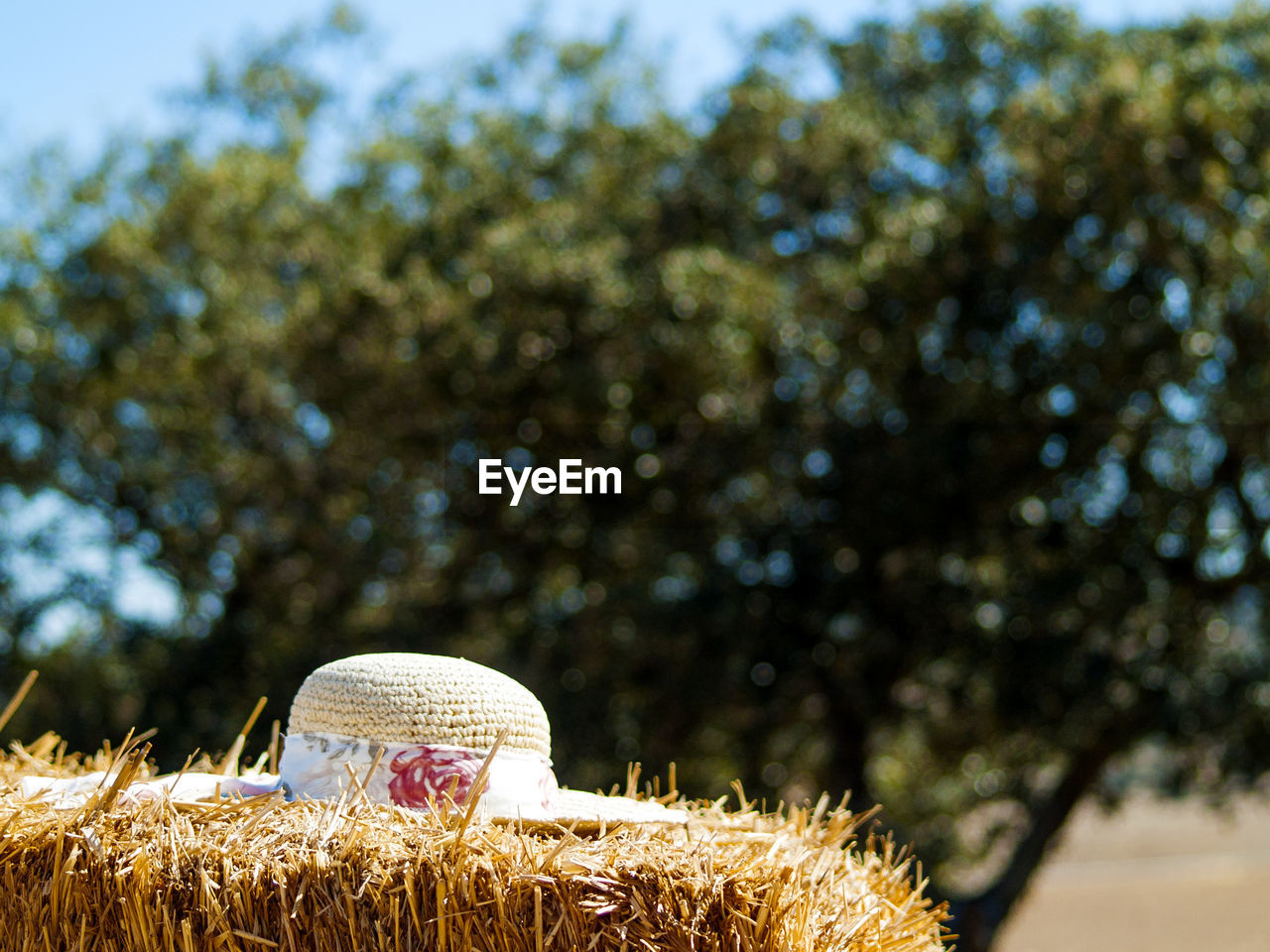 hat, day, plant, sunlight, nature, tree, focus on foreground, land, outdoors, clothing, no people, growth, field, farm, close-up, agriculture, straw hat, sunny, hay, sky
