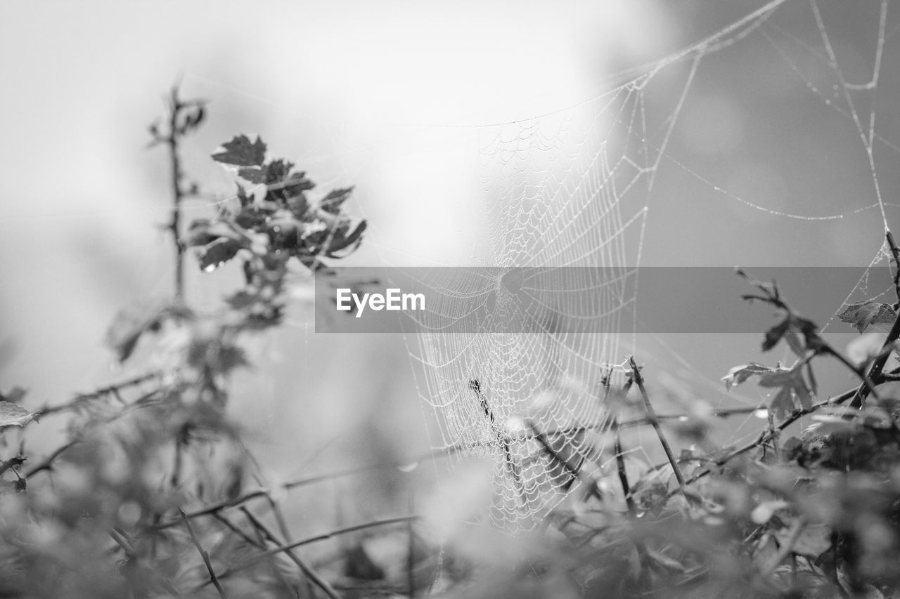 spider web, close-up, nature, no people, day, outdoors, focus on foreground, selective focus, growth, web, fragility, beauty in nature, animal themes, freshness