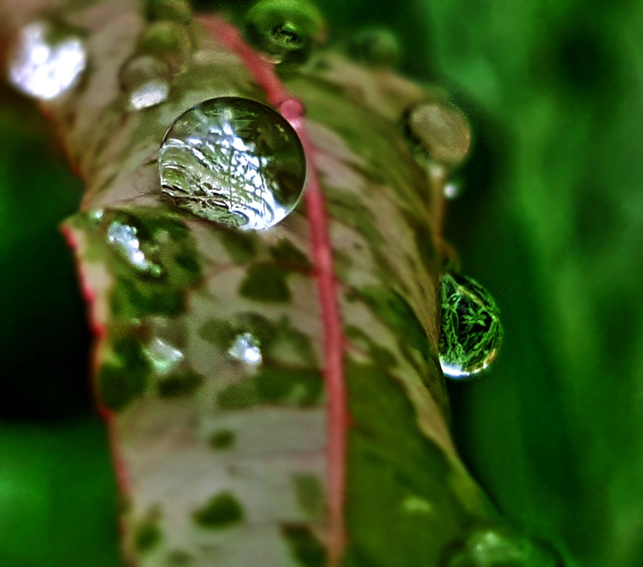 close-up, drop, green color, plant, selective focus, plant part, leaf, wet, no people, nature, water, beauty in nature, growth, purity, focus on foreground, day, dew, reflection, outdoors, raindrop, blade of grass