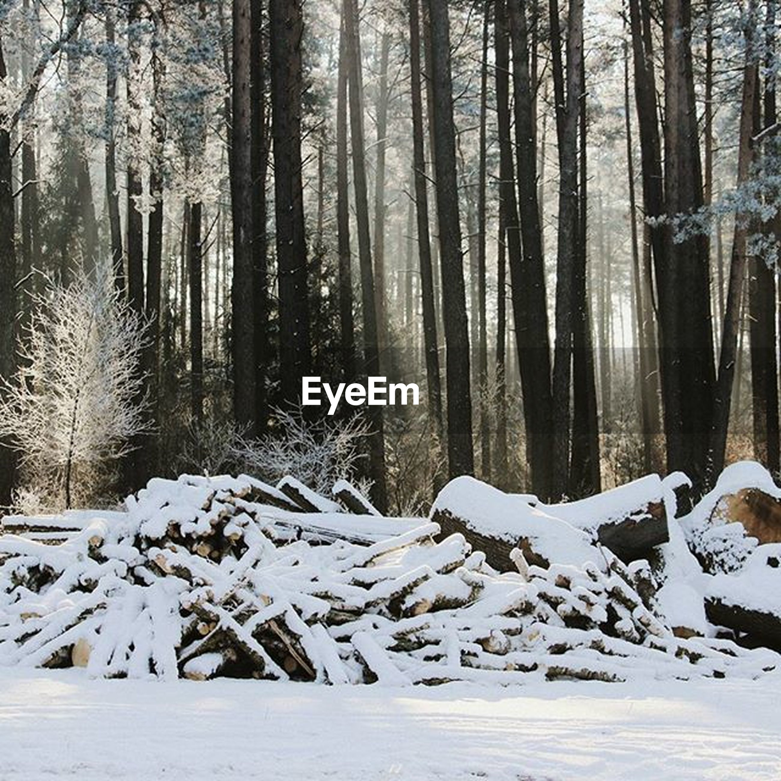 snow, winter, cold temperature, season, tree, weather, forest, covering, tranquility, tranquil scene, woodland, landscape, nature, tree trunk, beauty in nature, scenics, white color, frozen, covered, non-urban scene