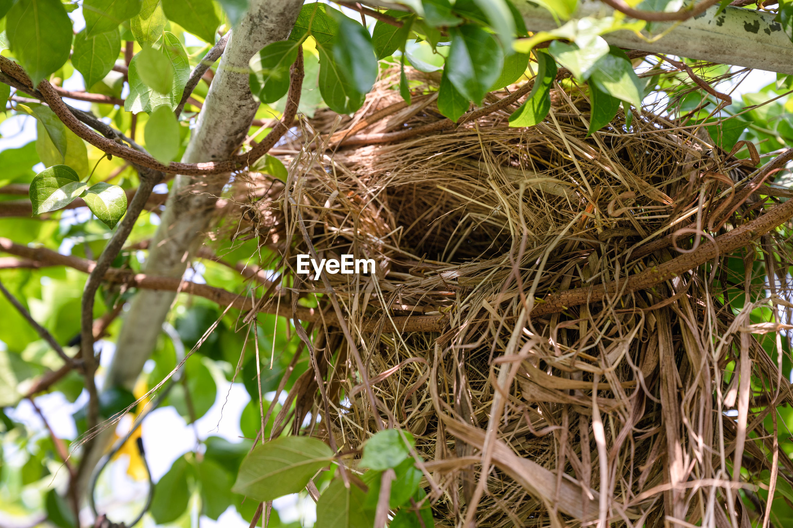 LOW ANGLE VIEW OF BIRD IN NEST