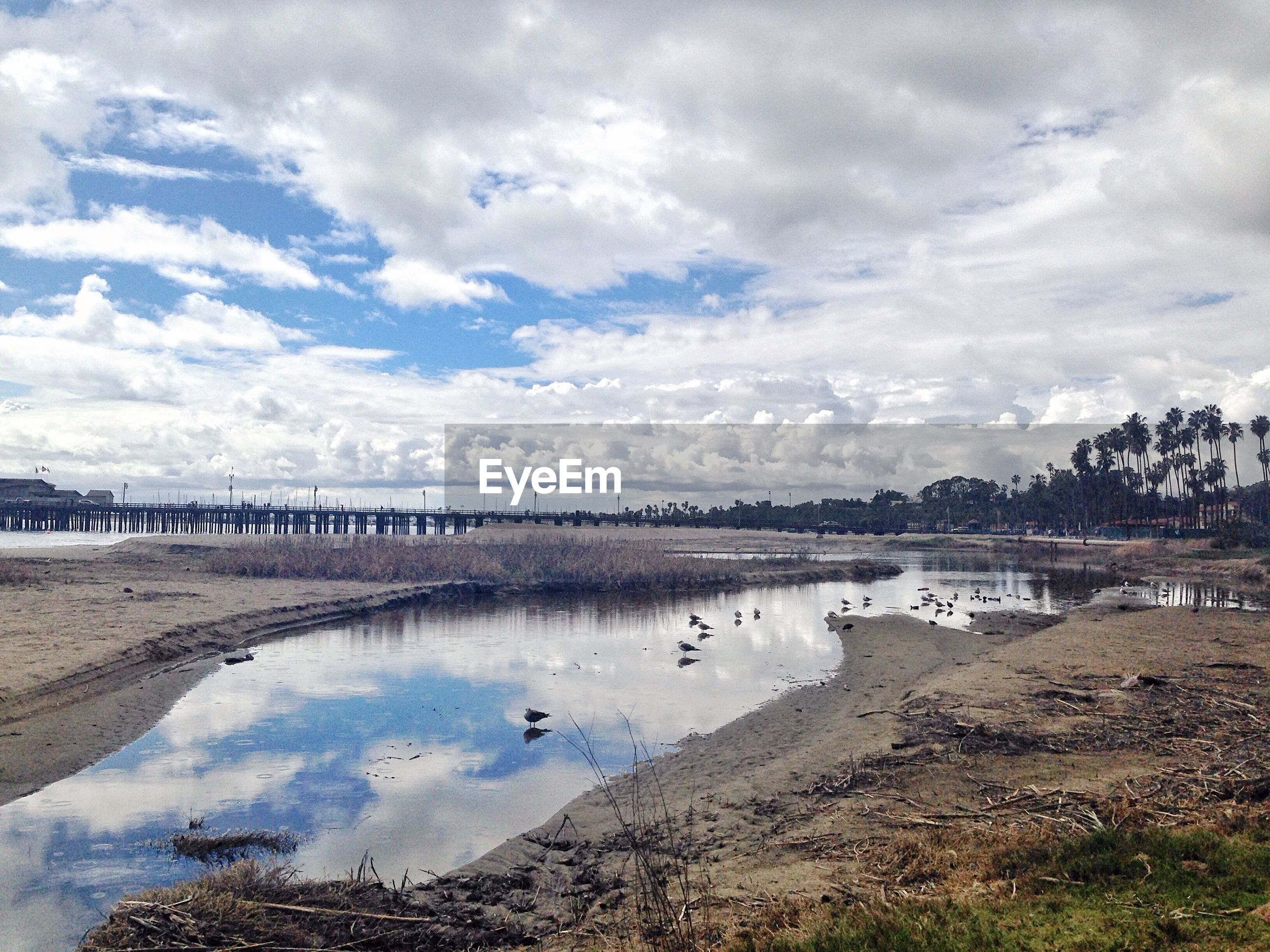 water, sky, bird, cloud - sky, animal themes, cloudy, nature, tranquility, tranquil scene, scenics, animals in the wild, beauty in nature, wildlife, beach, lake, shore, cloud, day, river