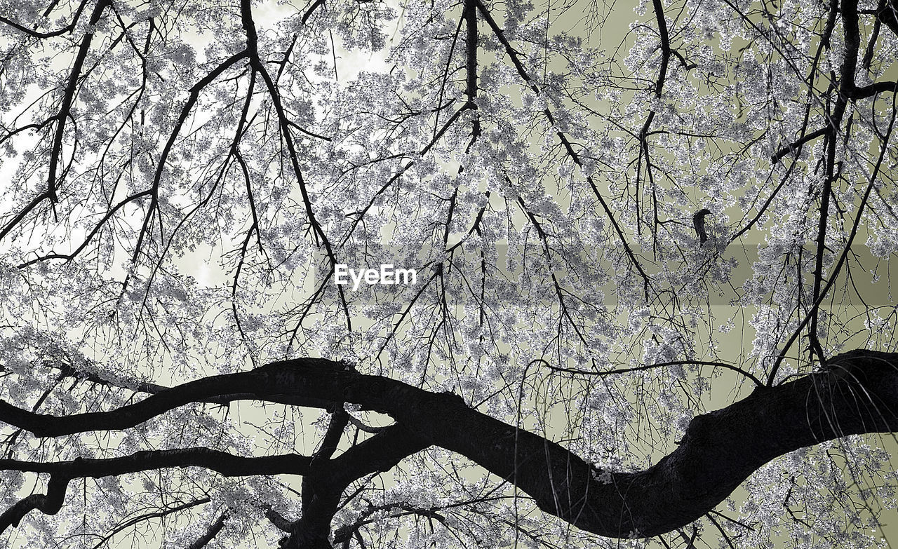 tree, branch, plant, nature, beauty in nature, bare tree, tranquility, low angle view, day, trunk, tree trunk, no people, outdoors, growth, land, forest, silhouette, scenics - nature, autumn, sky, change, tree canopy
