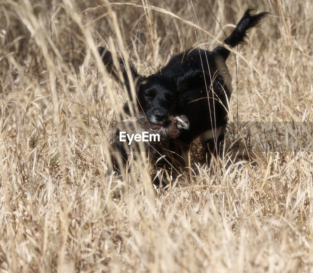 animal themes, one animal, grass, mammal, pets, dog, domestic animals, field, no people, outdoors, day, nature