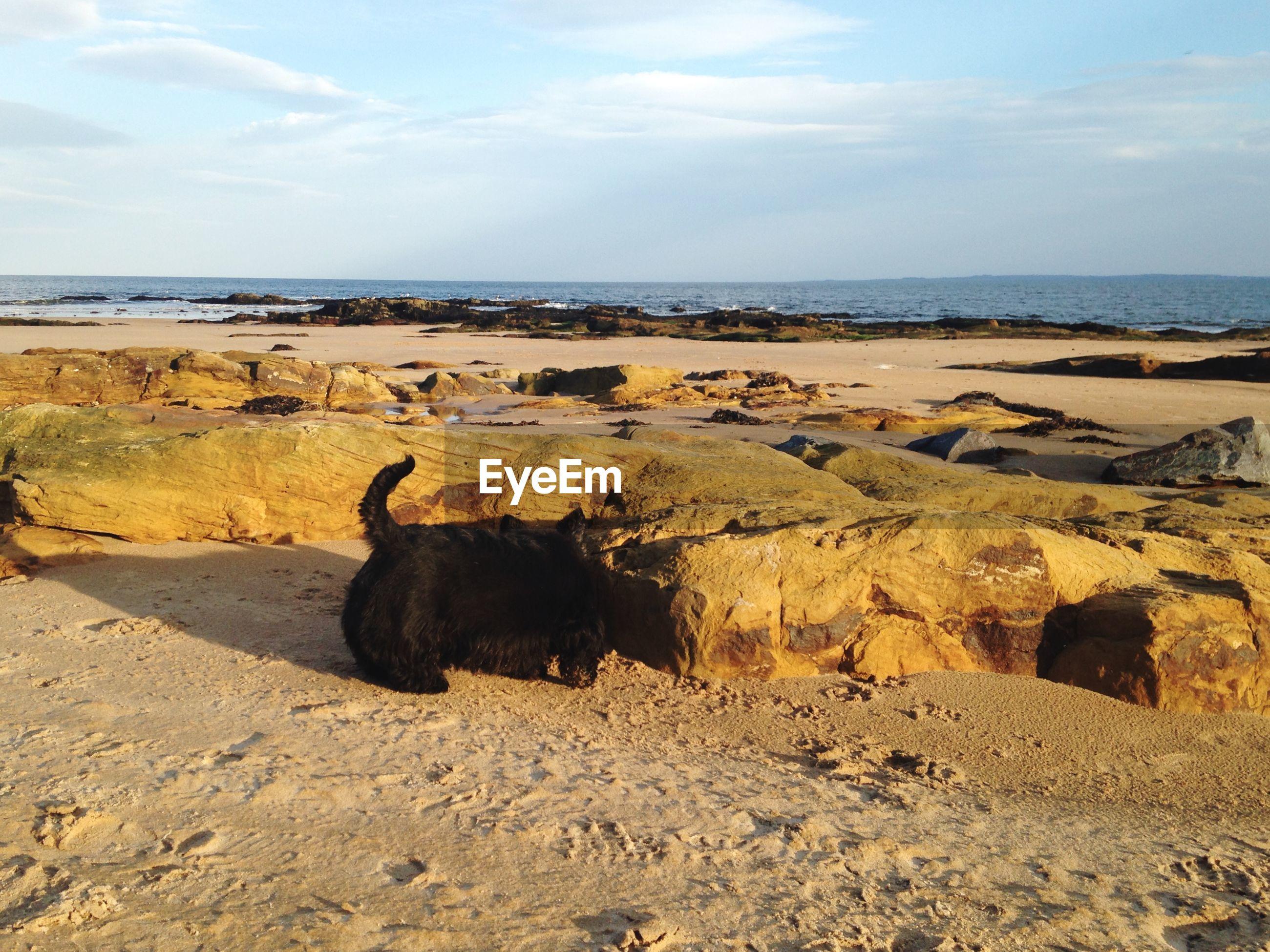 High angle view of black dog on beach