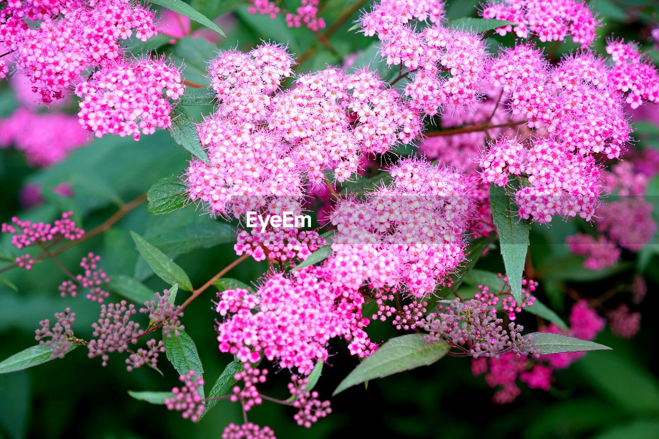beauty in nature, growth, flower, fragility, nature, pink color, freshness, plant, no people, day, outdoors, petal, blooming, close-up, flower head