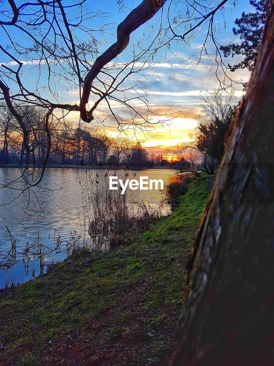 sunset, lake, water, tree, nature, tranquil scene, beauty in nature, scenics, tranquility, bare tree, grass, no people, reflection, outdoors, sky, landscape, day