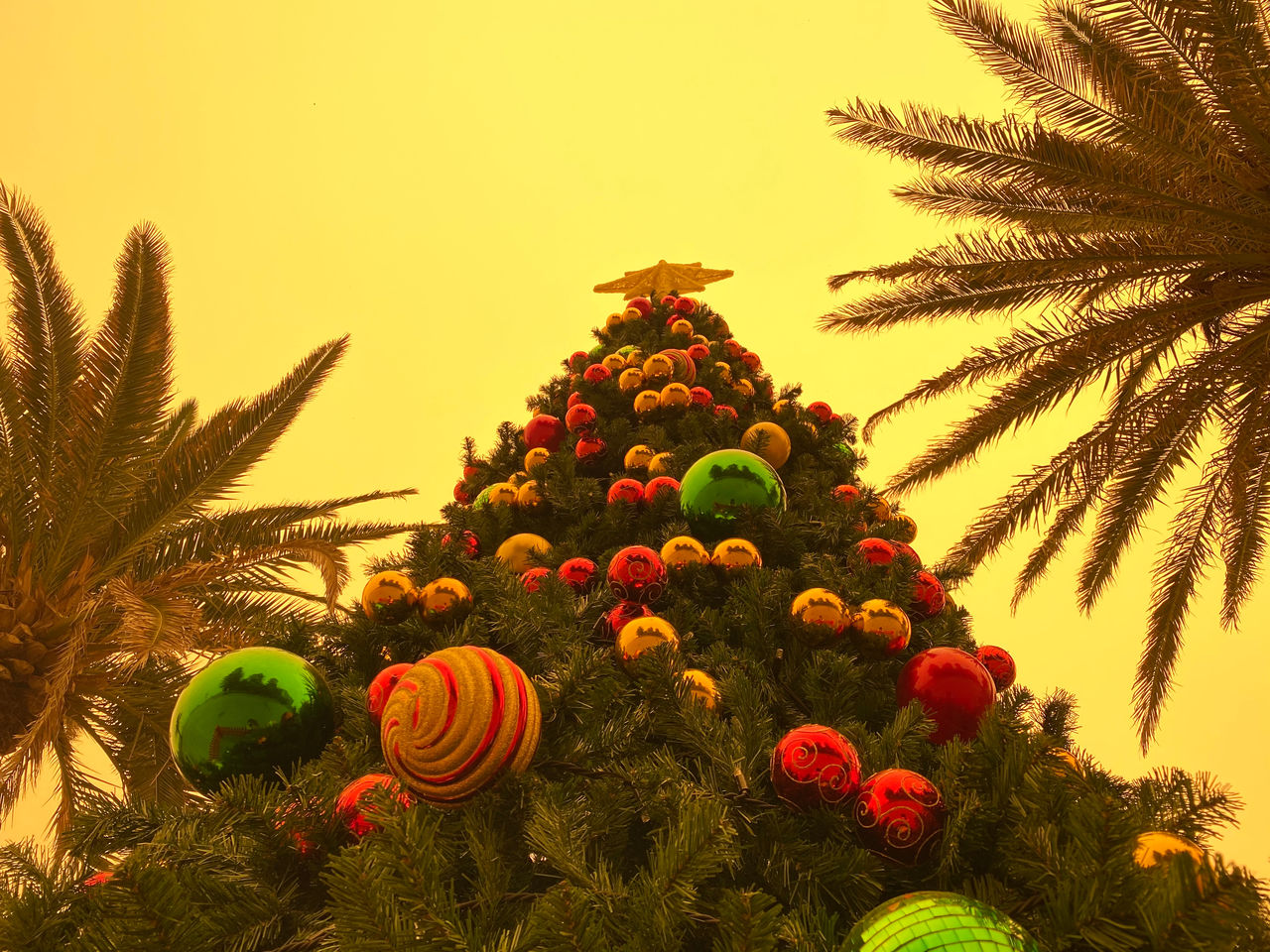 plant, tree, decoration, no people, growth, nature, celebration, sky, holiday, christmas decoration, christmas, beauty in nature, green color, christmas tree, land, christmas ornament, food, close-up, food and drink, outdoors