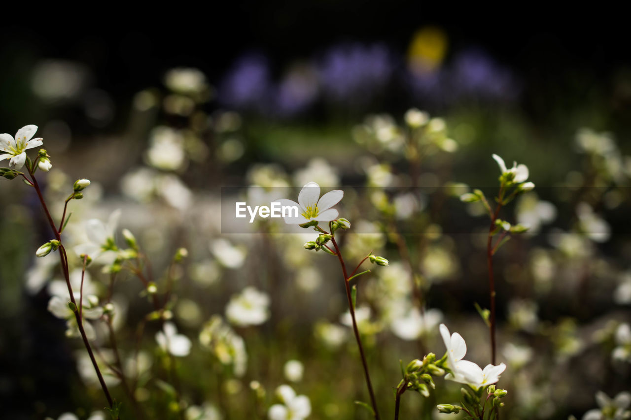 Flowers Blooming In Sunlight