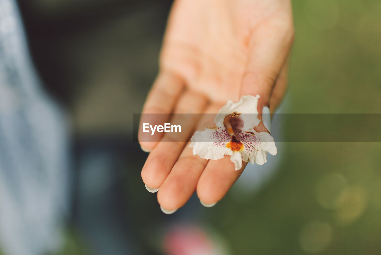 Cropped Hand Holding Petal