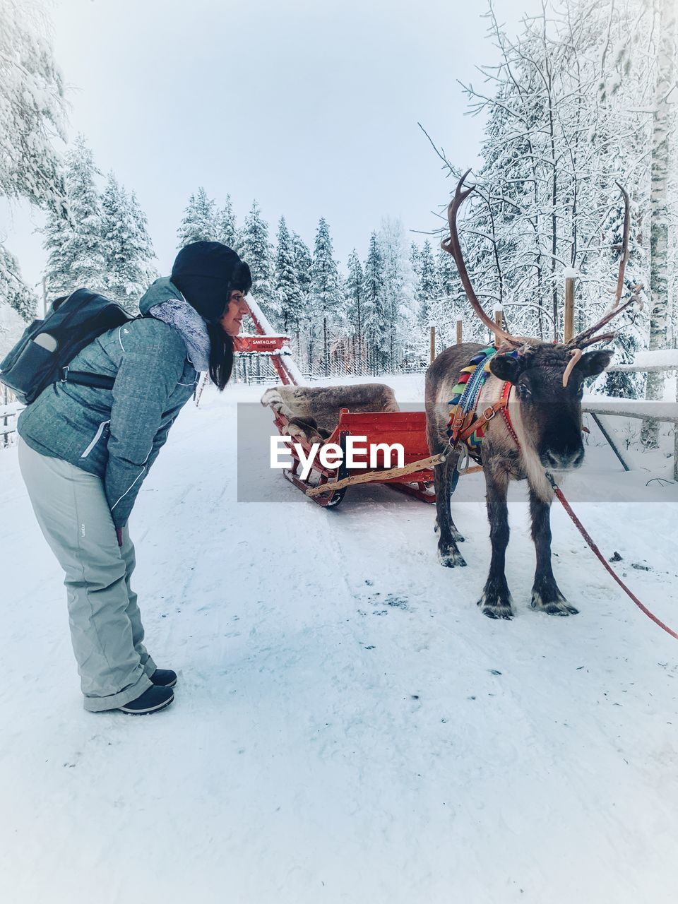 Full length side view of woman looking at reindeer while standing on snow covered land during winter