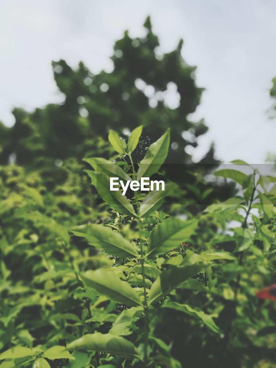 growth, green color, nature, leaf, no people, plant, day, beauty in nature, freshness, outdoors, close-up, fragility
