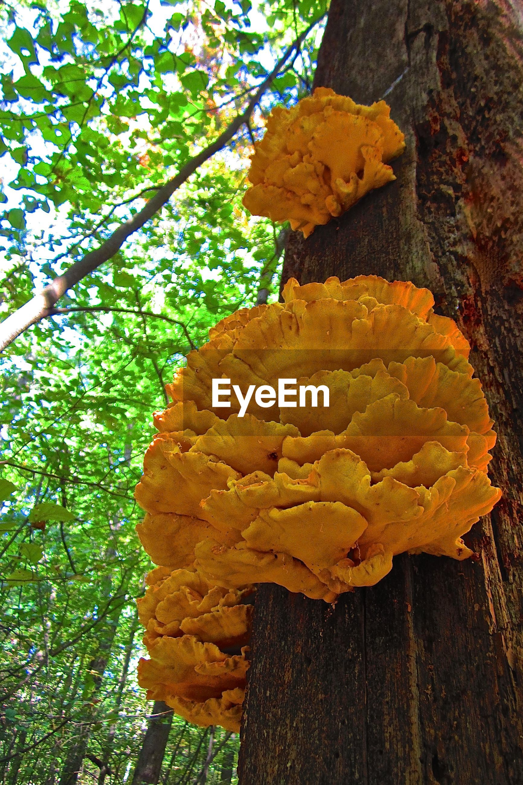 Close-up of fungus growing on tree trunk in forest