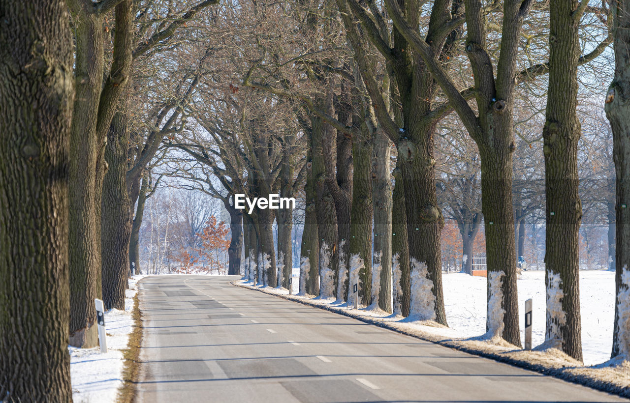 EMPTY FOOTPATH ALONG BARE TREES