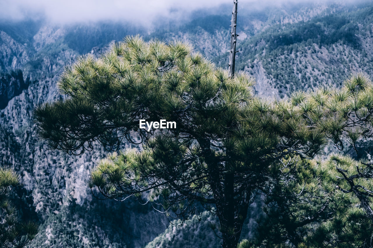 HIGH ANGLE VIEW OF TREES GROWING ON MOUNTAIN