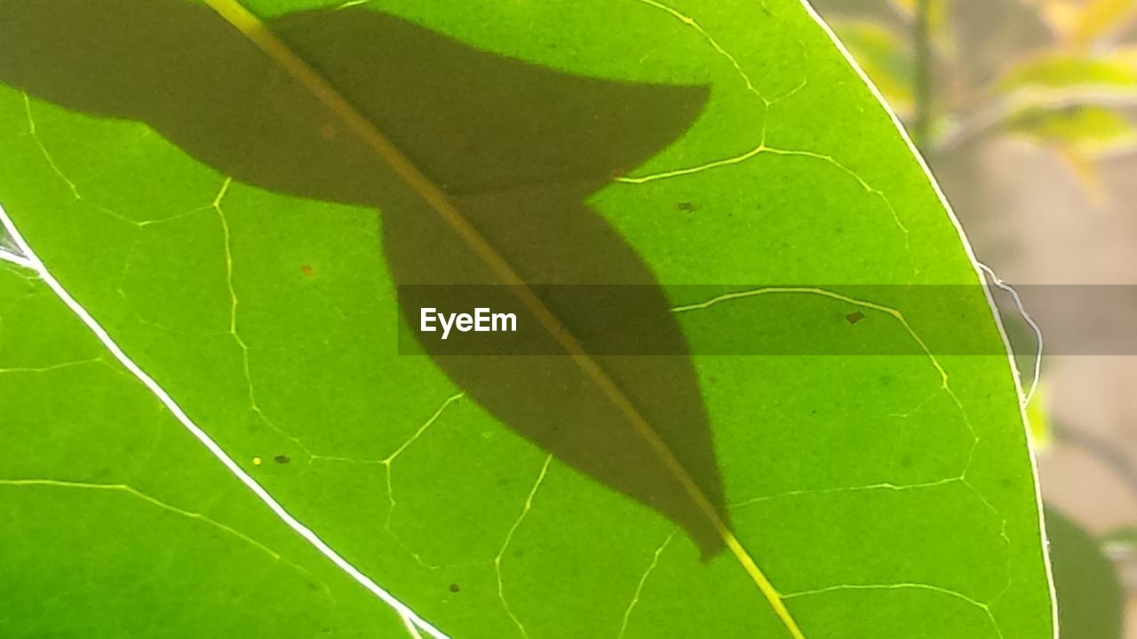 leaf, green color, close-up, growth, nature, no people, day, outdoors, plant, insect, beauty in nature, fragility, animal themes, freshness