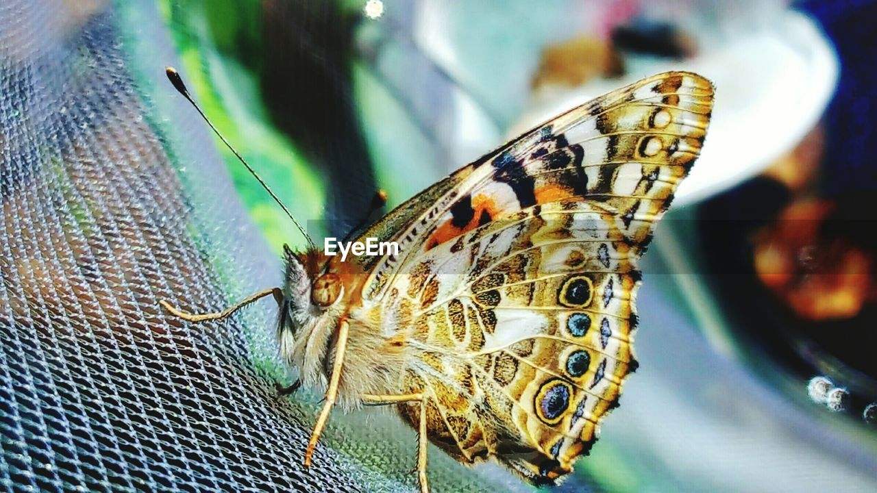 Close-up of butterfly on fence
