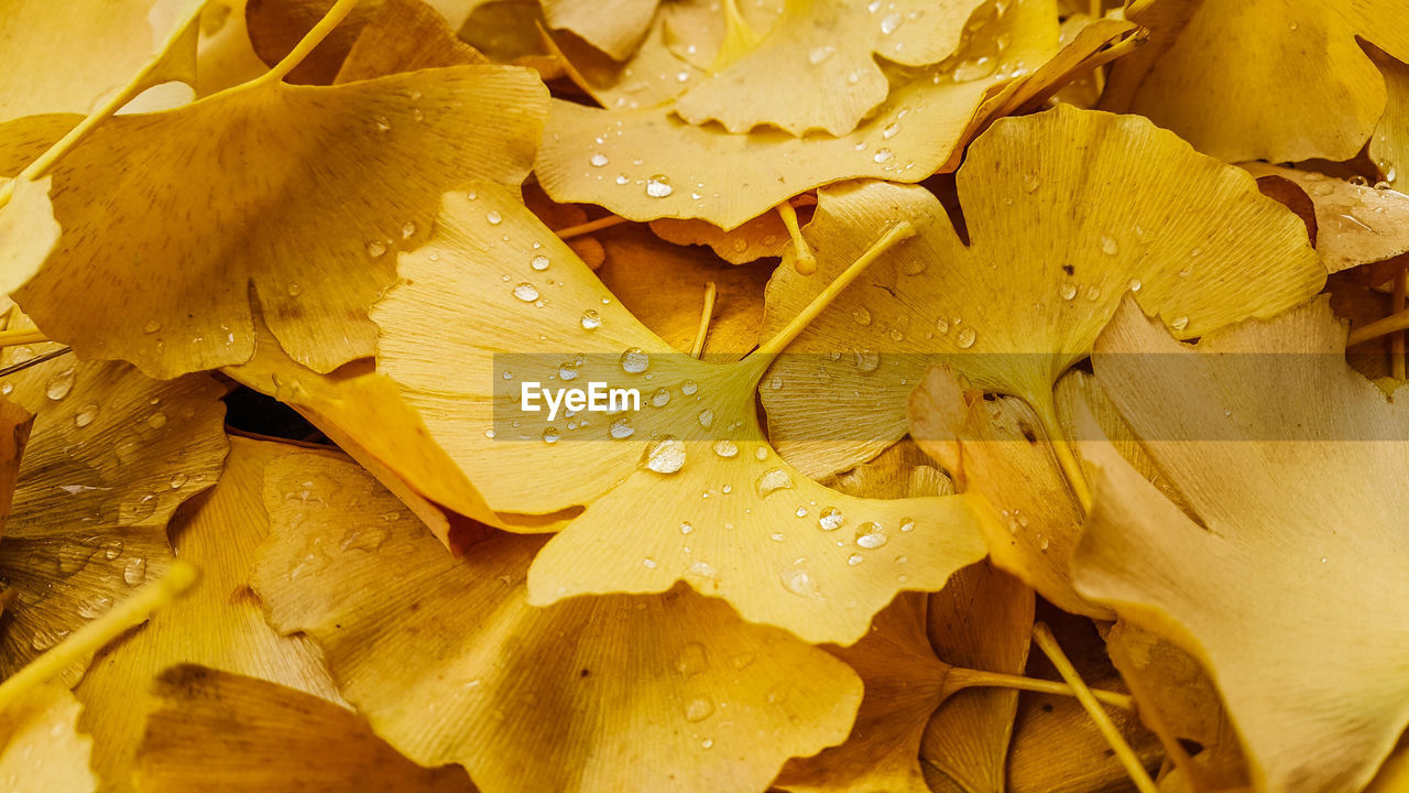 wet, close-up, drop, yellow, beauty in nature, flower, plant, no people, freshness, water, full frame, backgrounds, flowering plant, growth, petal, fragility, vulnerability, inflorescence, flower head, dew, rain, raindrop