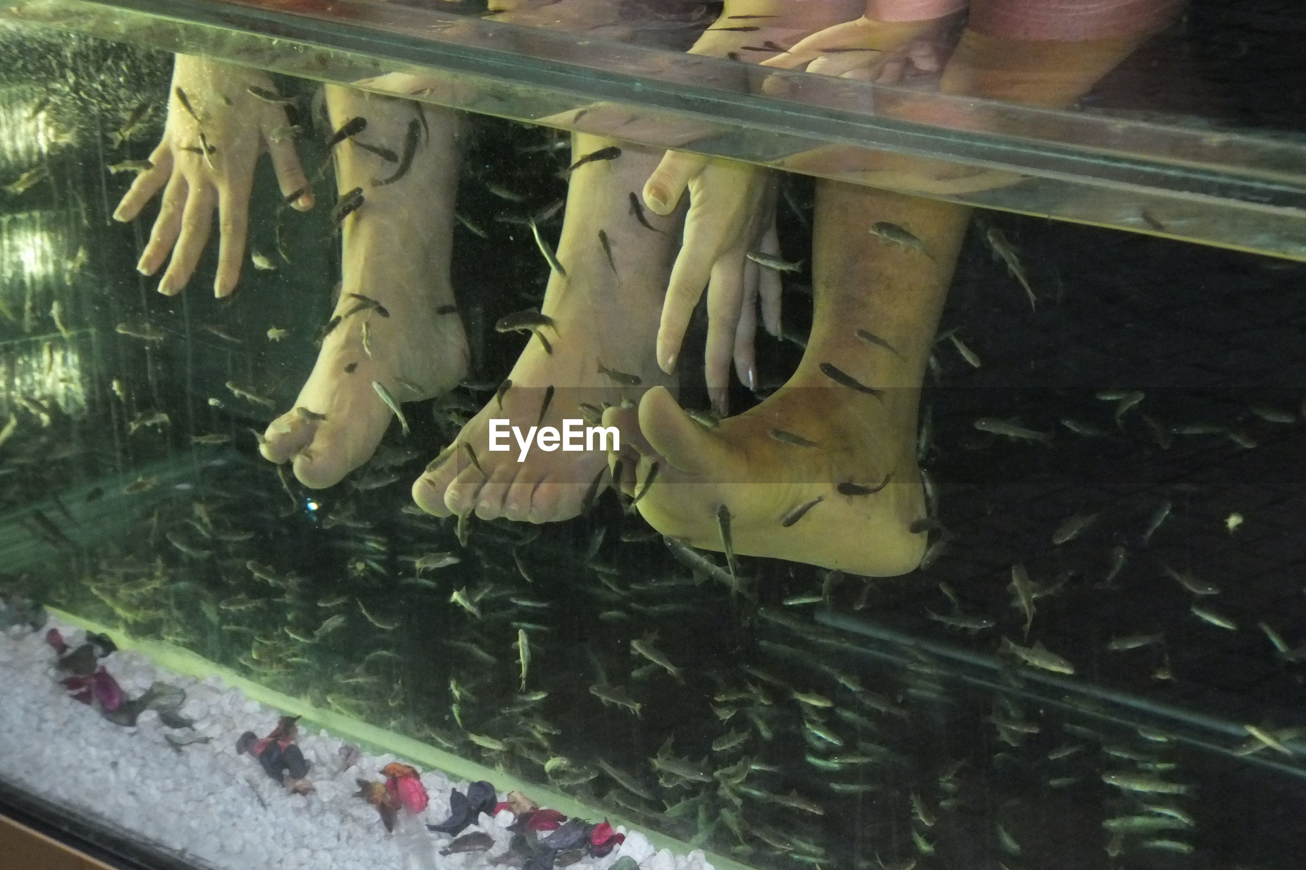Low section of people in fish tank