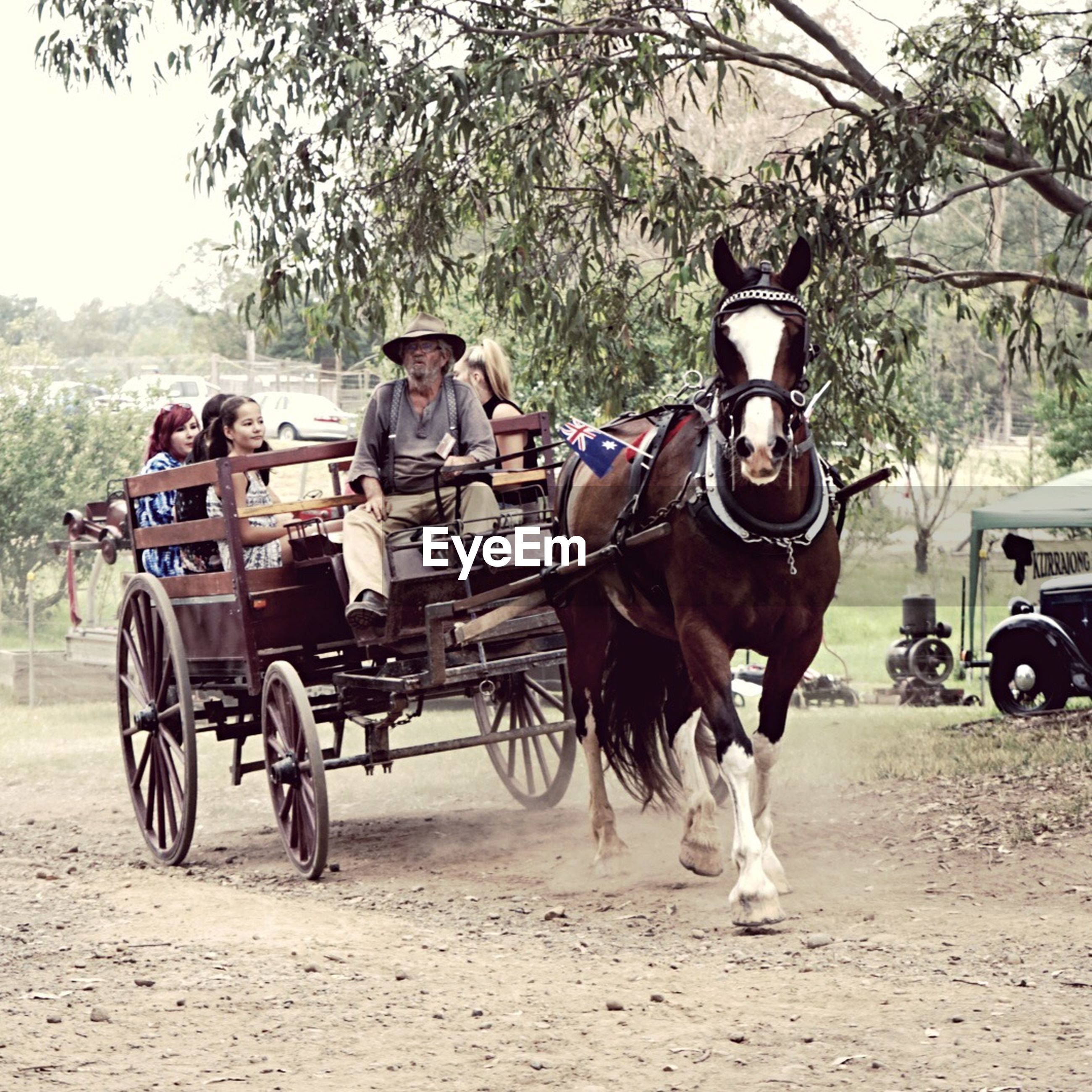 transportation, mode of transport, horse, domestic animals, mammal, horsedrawn, working animal, horse cart, tree, land vehicle, men, livestock, outdoors, real people, carriage, day, tractor, one person, people