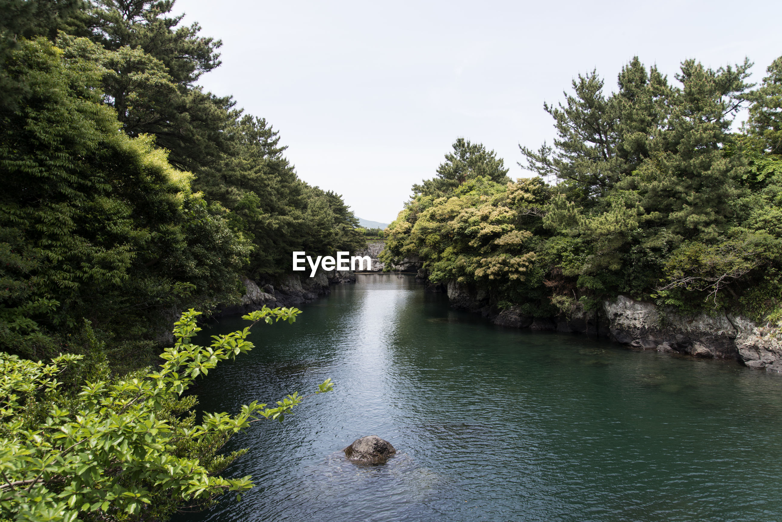 Scenic view of river against sky in forest